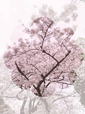 おはようございます☀(2020/03/22 09:05)皆木 えみりのブログ画像