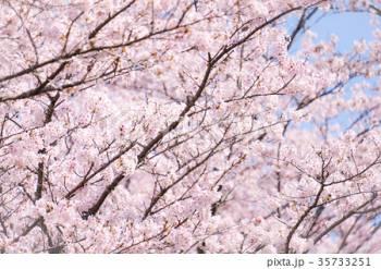 今日(2019/03/28 17:31)白井 芽衣のブログ画像