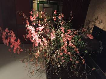 久々出勤します✨(2017/03/30 14:33)山川 穂希のブログ画像
