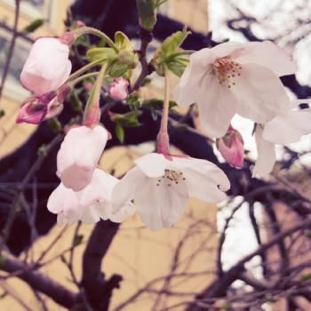 春ですね(2017/04/01 15:29)蓮見 はずきのブログ画像