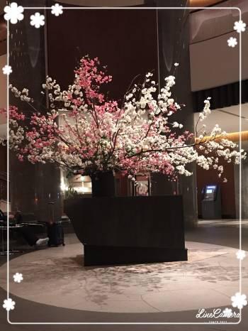 お花見(2017/04/04 22:36)神崎 あきらのブログ画像