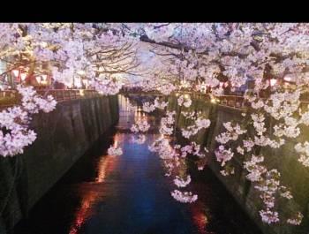 🌸あきら🌸(2020/03/10 19:27)神崎 あきらのブログ画像