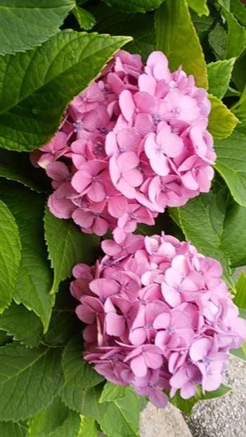 ありがとうございました(2017/06/30 18:07)木村 綾乃のブログ画像