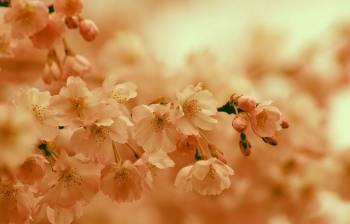 ありがとうございました(2020/03/21 00:38)木村 綾乃のブログ画像