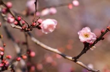 こんにちは(2021/02/02 17:07)木村 綾乃のブログ画像