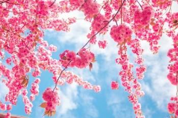 ありがとうございました(2021/03/15 00:48)木村 綾乃のブログ画像