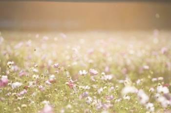 ありがとうございました(2021/09/10 07:25)木村 綾乃のブログ画像