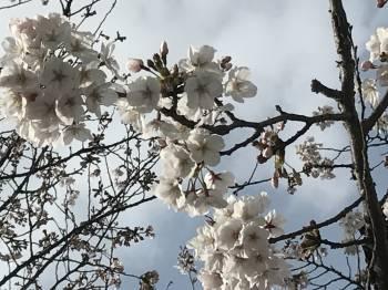 春ですねぇ(2017/04/15 14:10)藤井 沙也のブログ画像