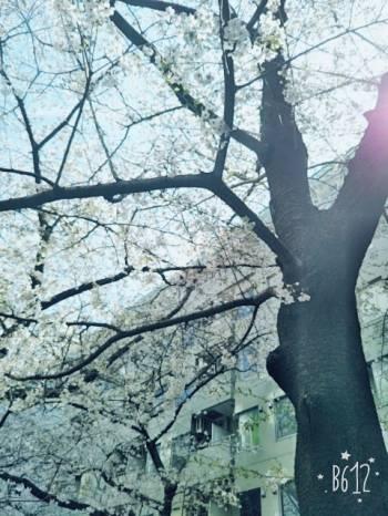 。(2017/04/13 14:40)浅田 結衣香のブログ画像
