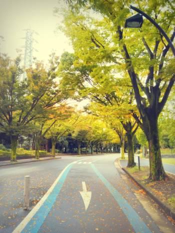 しばし秋(2017/10/21 08:28)春菜 りおんのブログ画像