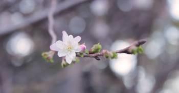 こんにちは(2019/03/22 12:32)上原 夏季のブログ画像