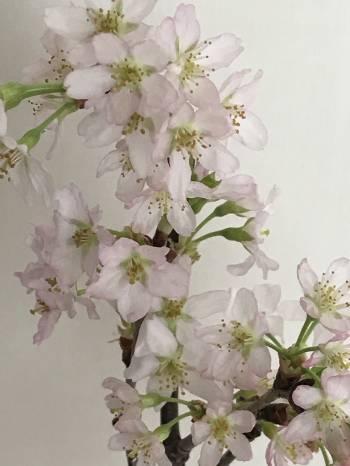 こんにちは♪(2018/03/21 10:37)内田 天音のブログ画像