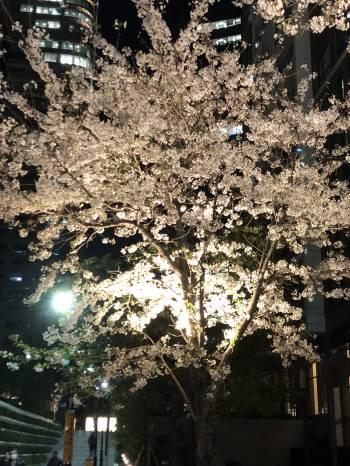 こんにちは♪(2019/04/09 11:47)小野寺 杏のブログ画像