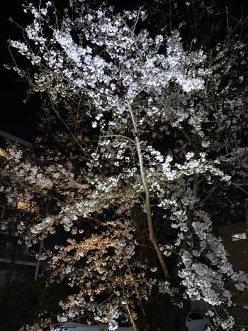 4月ですね🌸(2021/04/04 10:29)小野寺 杏のブログ画像