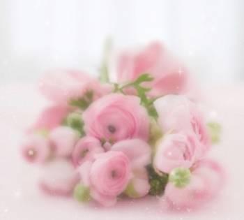 🌸おはようございます🌸(2019/02/25 06:35)片瀬 美沙のブログ画像