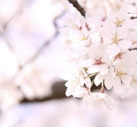 🌸3/30🌸(2019/03/30 13:03)片瀬 美沙のブログ画像