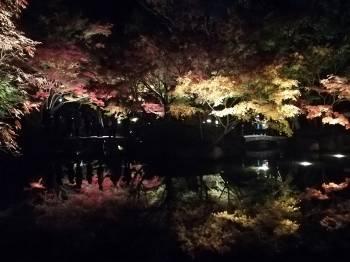 紅葉🍁(2020/11/05 11:37)麻生 あかねのブログ画像