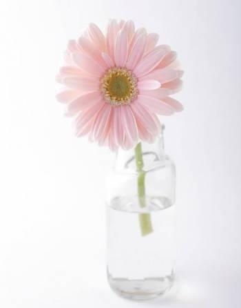 お花が好き(2020/08/28 11:29)菊川 あずさのブログ画像