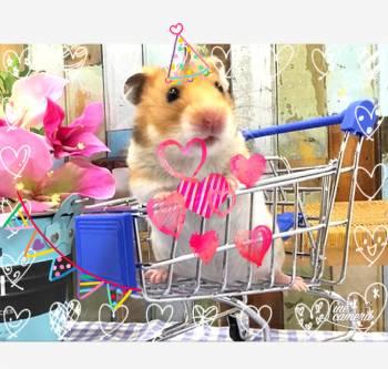 禁欲(2021/05/18 06:16)元一 スミレのブログ画像