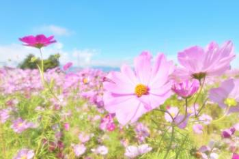 お休みごめんなさい(2018/08/05 00:48)朝倉 日向のブログ画像